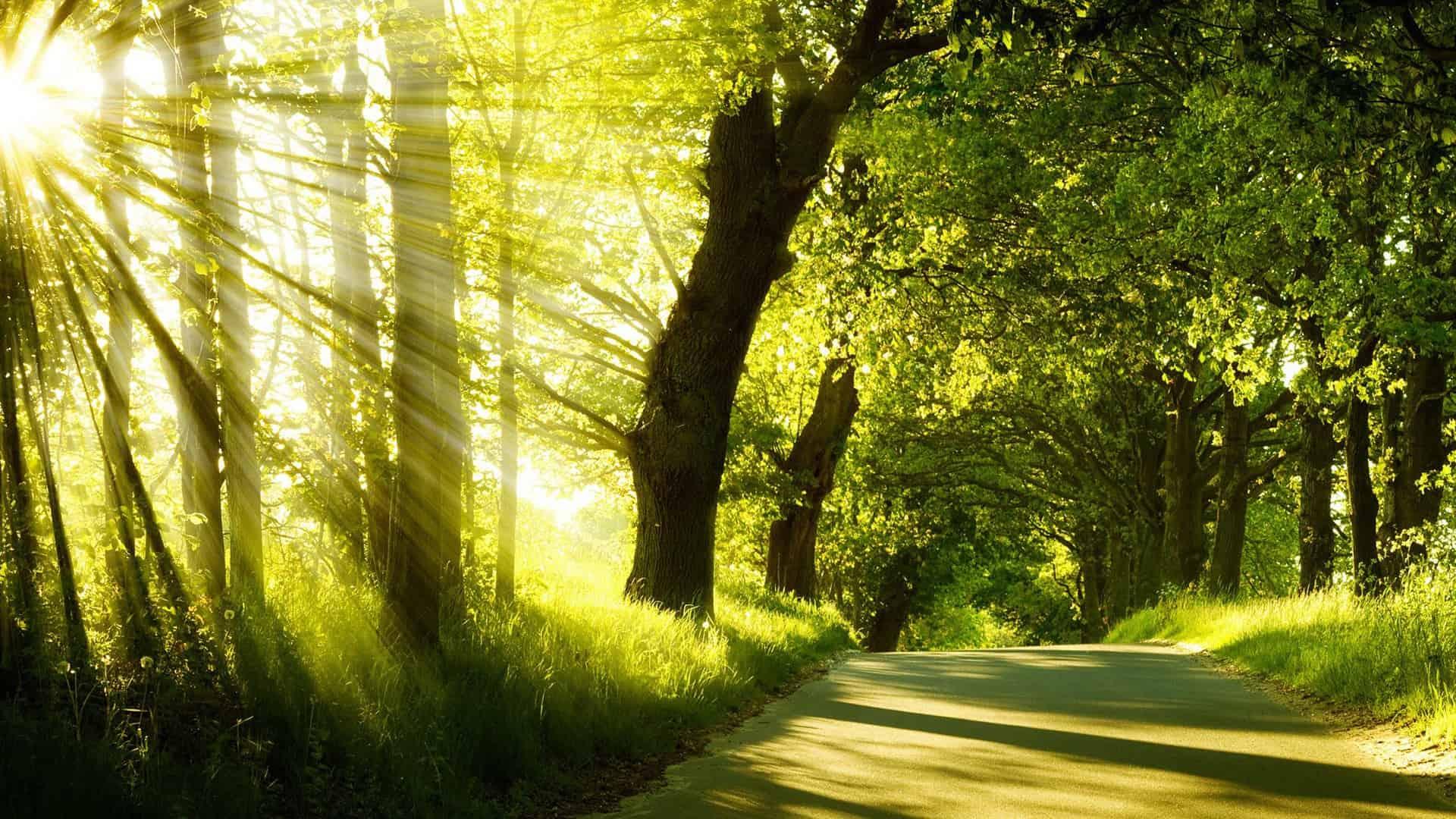 bos-met-zon